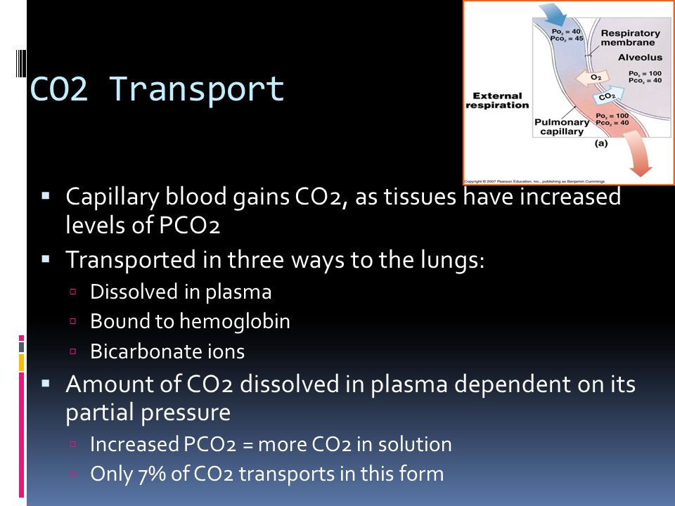 CO2 Transport Capillary blood gains CO2, as tissues have increased levels of PCO2. Transported in three ways to the lungs:
