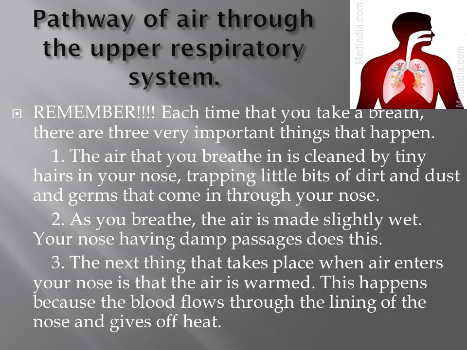 Pathway of air through the upper respiratory system.