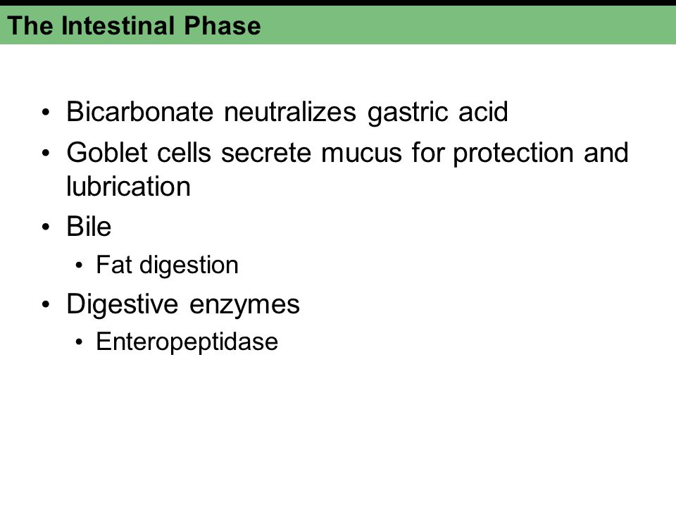 Bicarbonate neutralizes gastric acid