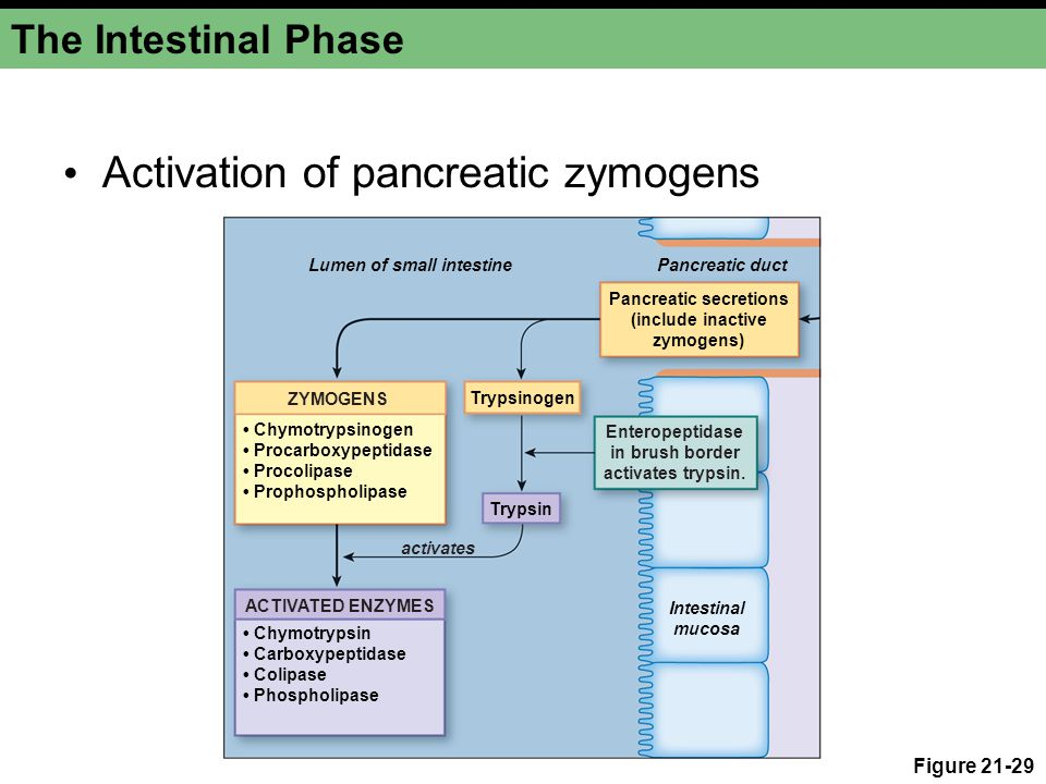 Activation of pancreatic zymogens