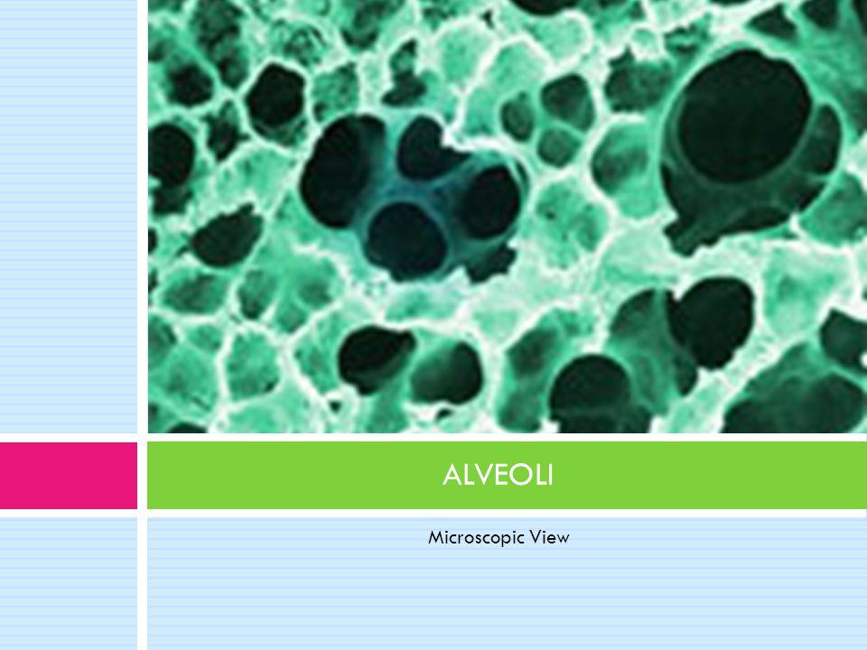ALVEOLI Microscopic View