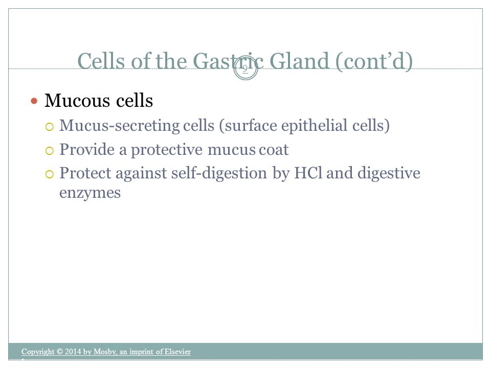 Cells of the Gastric Gland (cont'd)