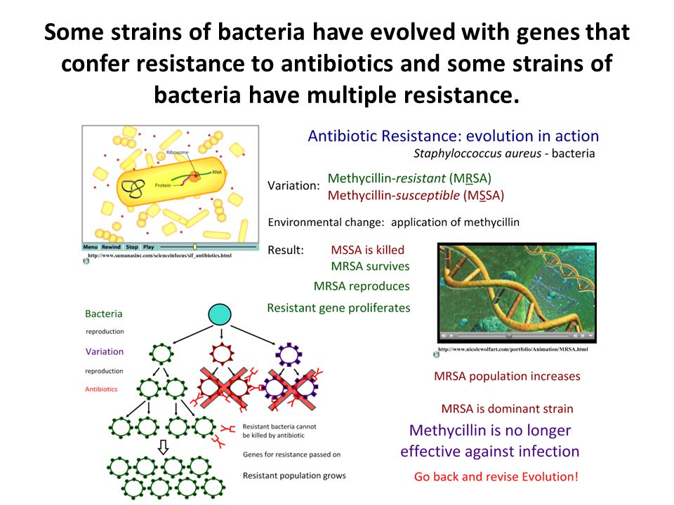 Some strains of bacteria have evolved with genes that confer resistance to antibiotics and some strains of bacteria have multiple resistance.
