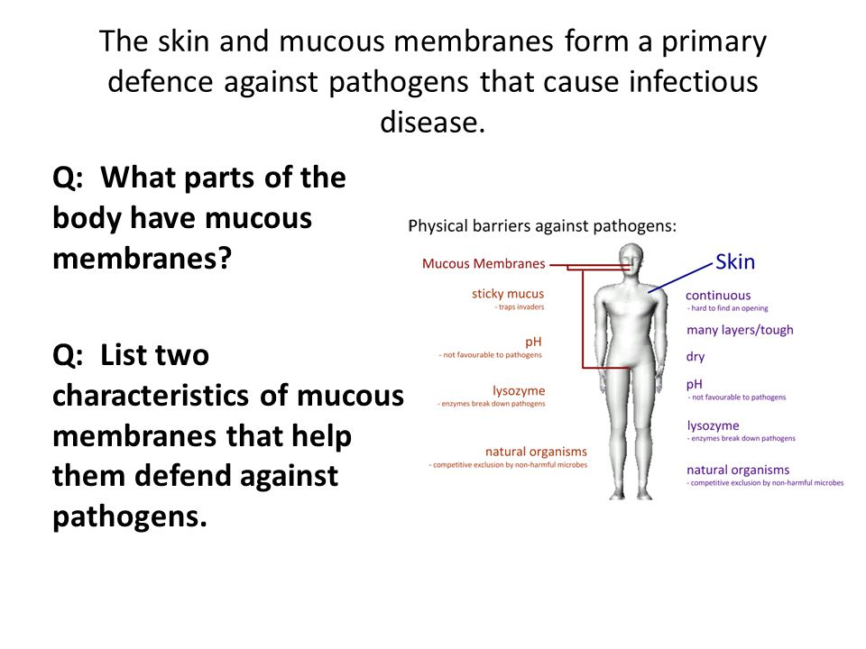 The skin and mucous membranes form a primary defence against pathogens that cause infectious disease.