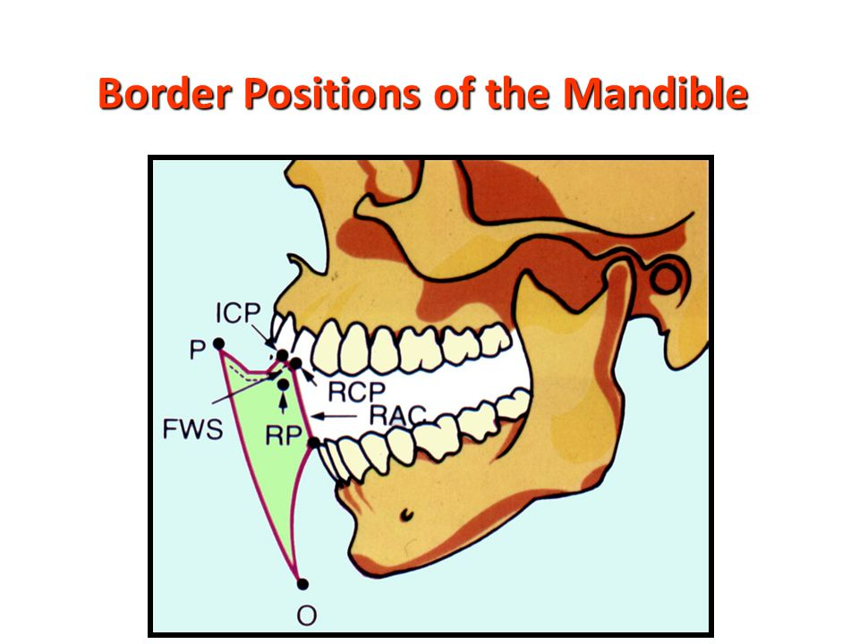 Border Positions of the Mandible