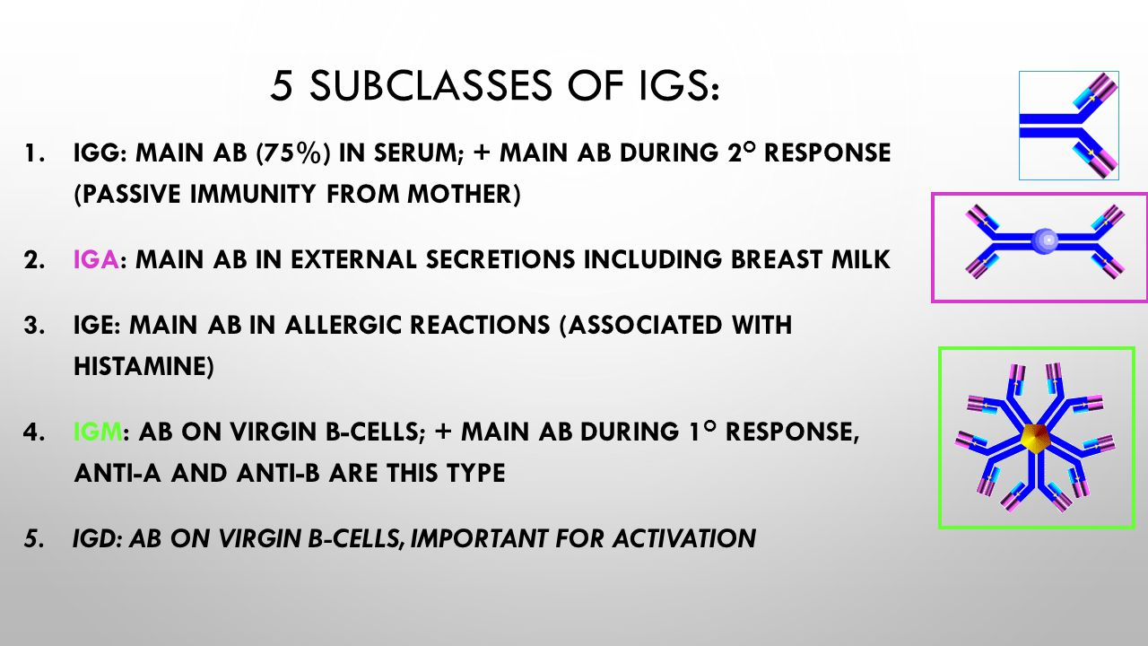 5 subclasses of Igs: IgG: main Ab (75%) in serum; + main Ab during 2o response (passive immunity from mother)