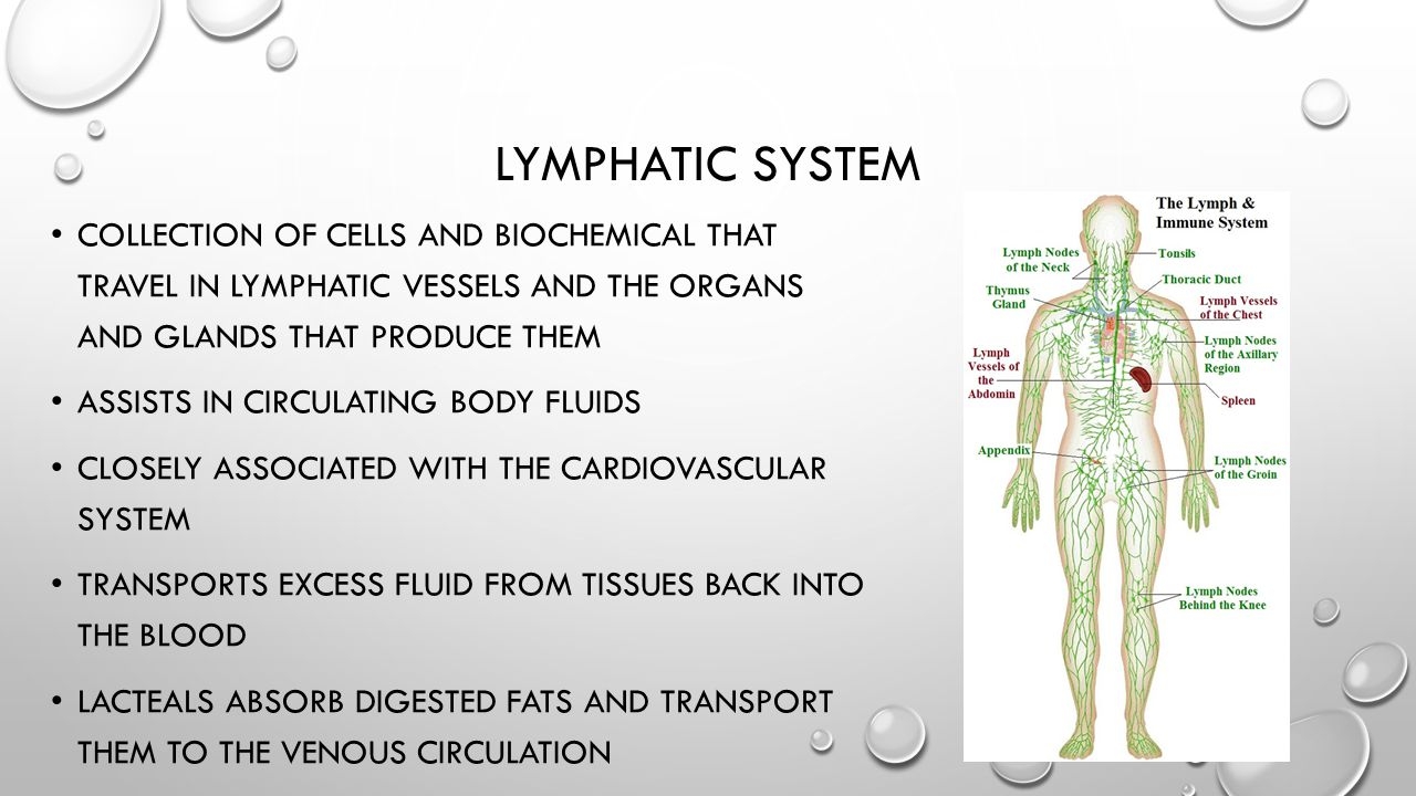 Lymphatic System Collection of cells and biochemical that travel in lymphatic vessels and the organs and glands that produce them.