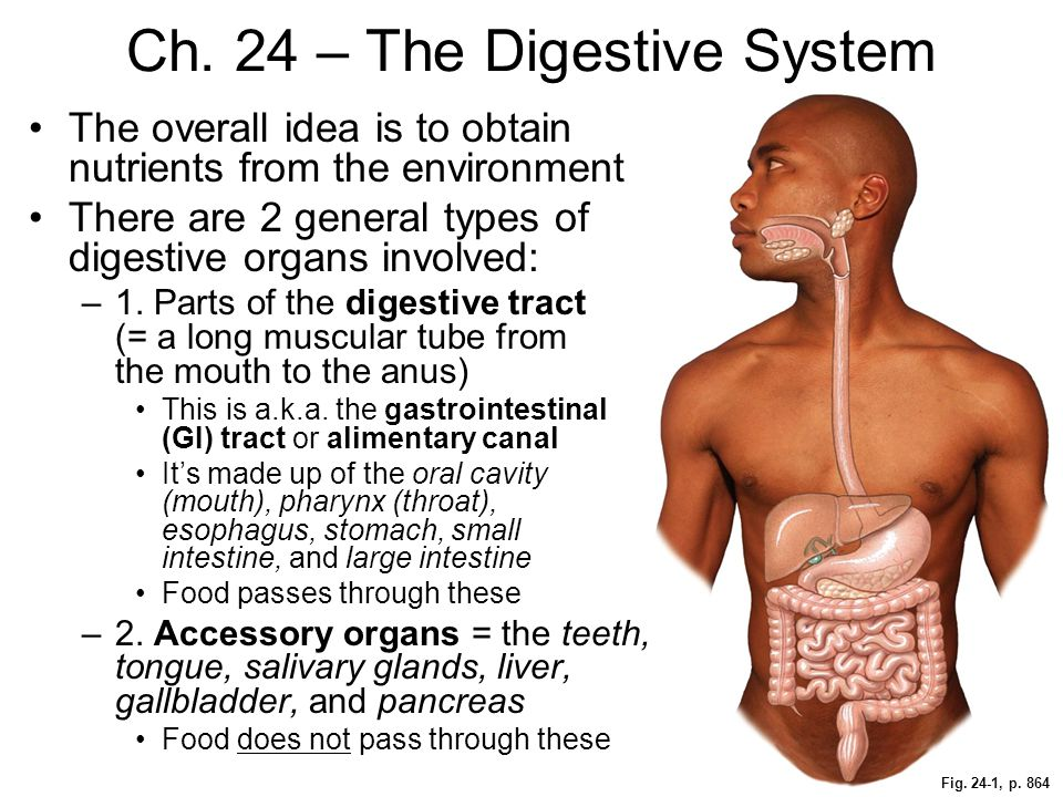 Ch. 24 – The Digestive System