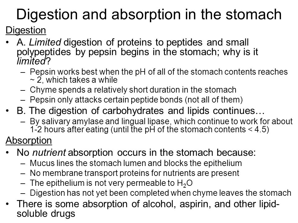 Digestion and absorption in the stomach