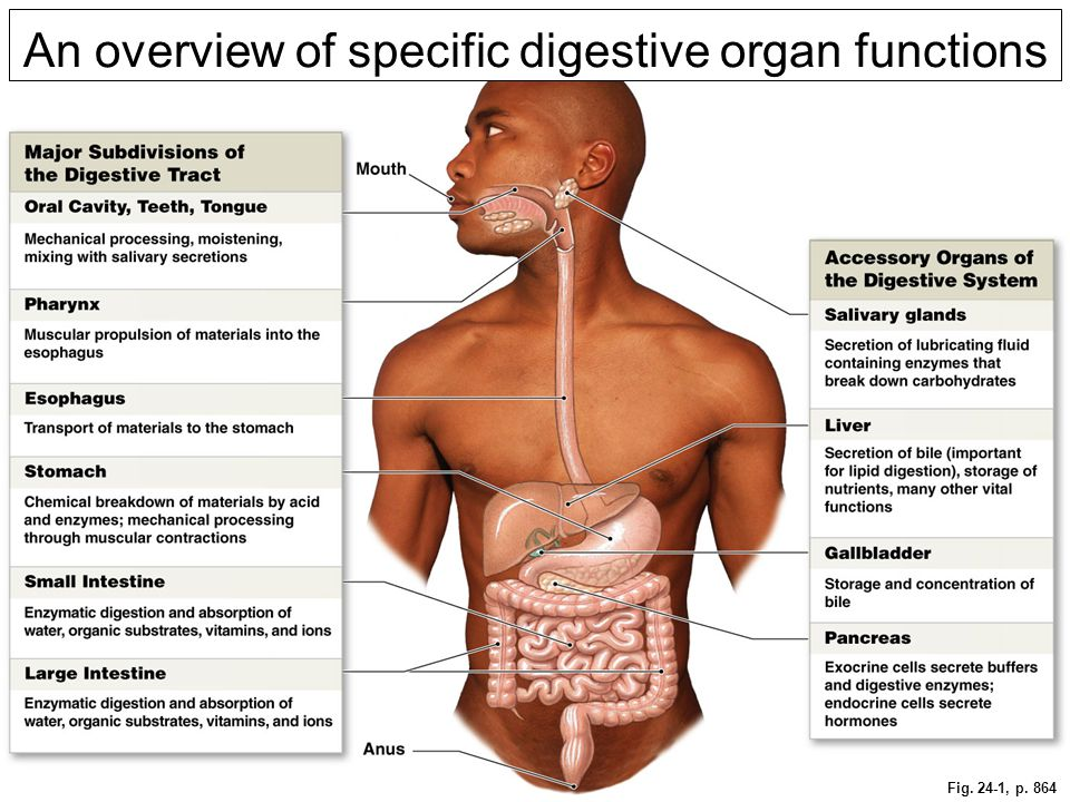 An overview of specific digestive organ functions