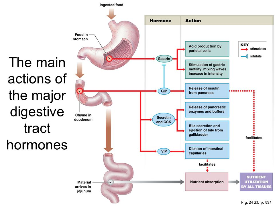 The main actions of the major digestive tract hormones