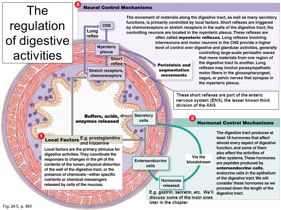 The regulation of digestive activities