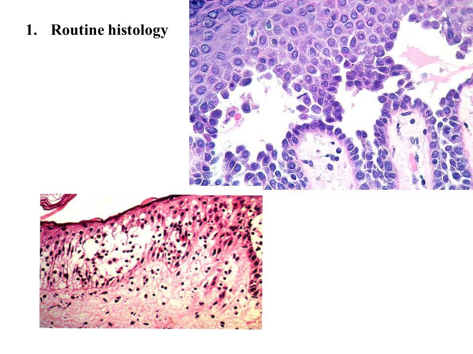 Routine histology