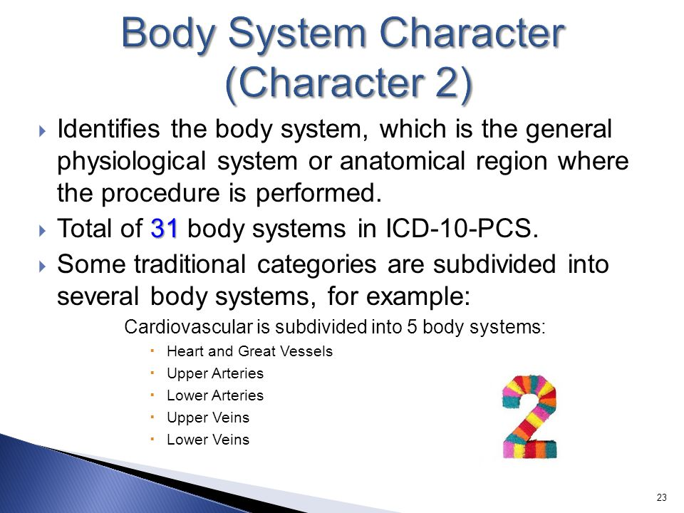 Body System Character (Character 2)