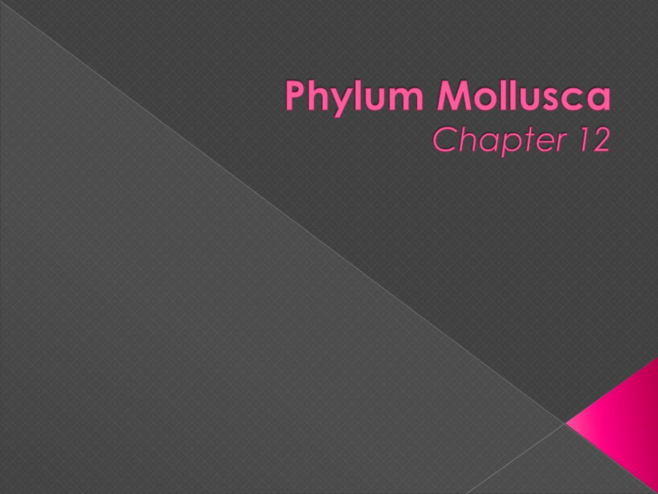 Phylum Mollusca Chapter 12