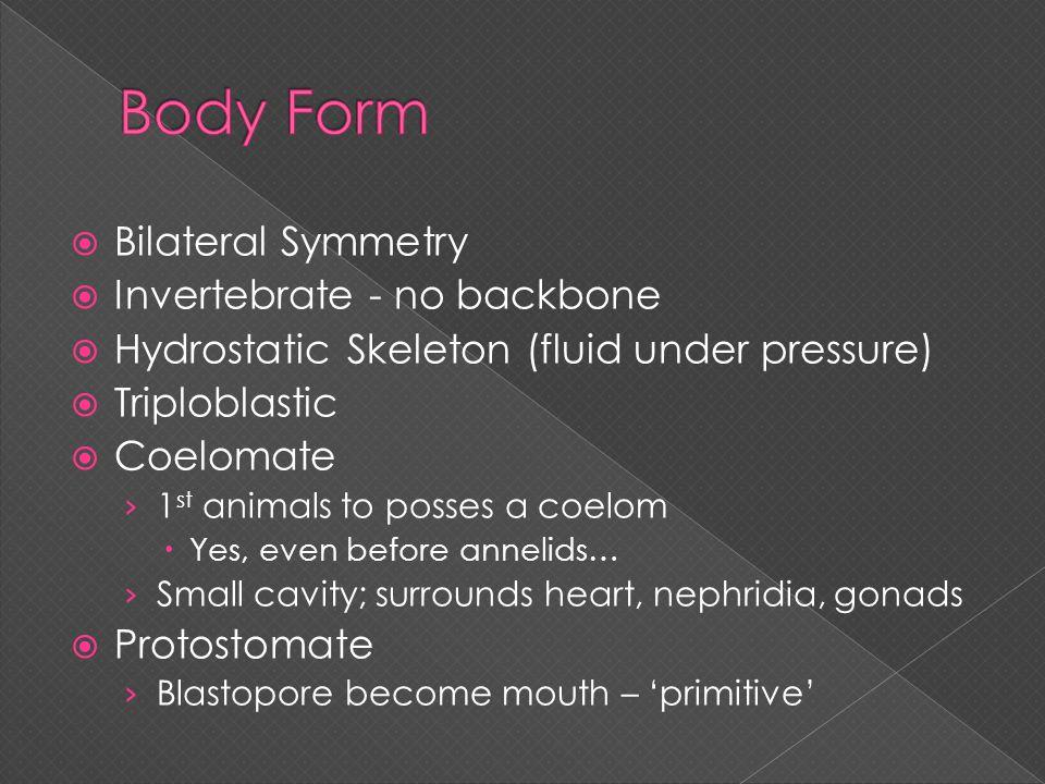 Body Form Bilateral Symmetry Invertebrate - no backbone