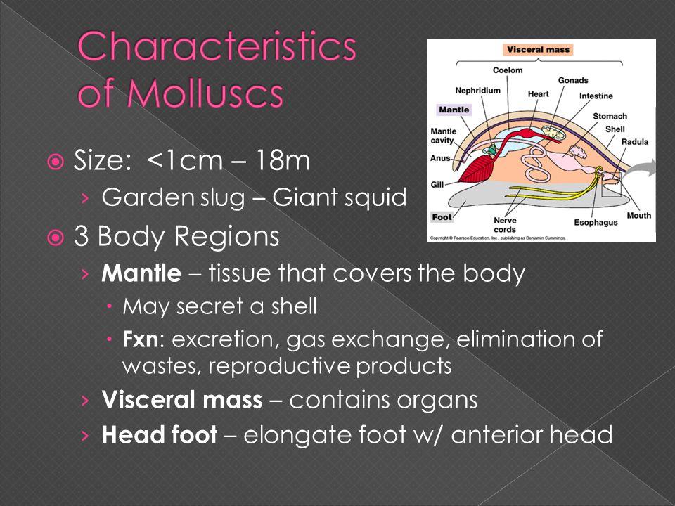 Characteristics of Molluscs