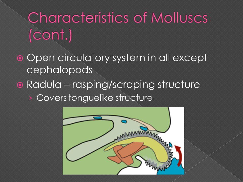 Characteristics of Molluscs (cont.)