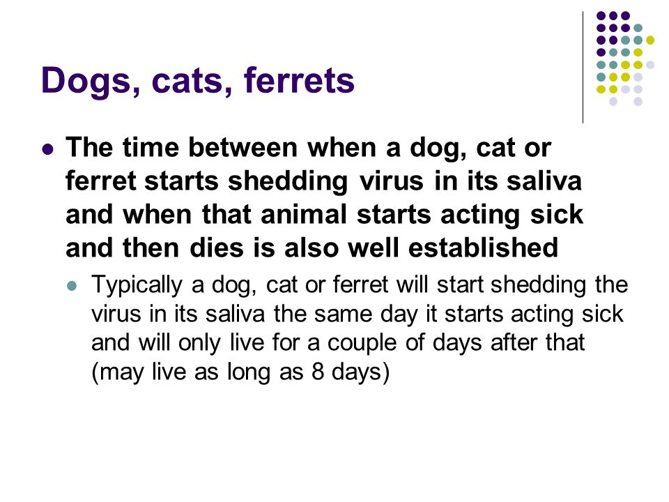 Dogs, cats, ferrets