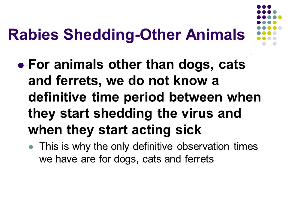 Rabies Shedding-Other Animals