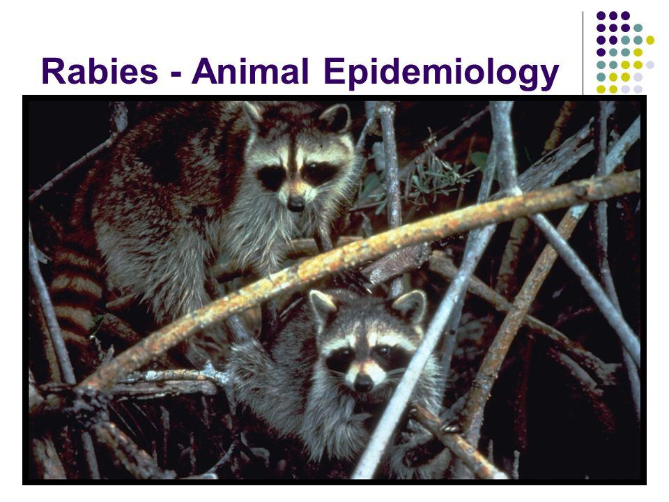 Rabies - Animal Epidemiology