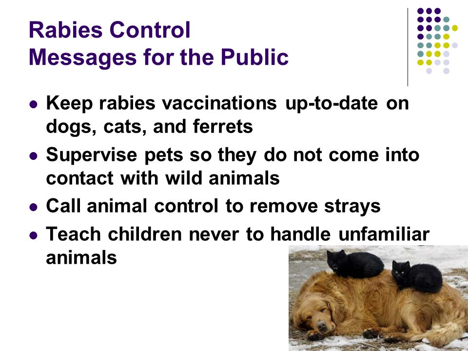 Rabies Control Messages for the Public