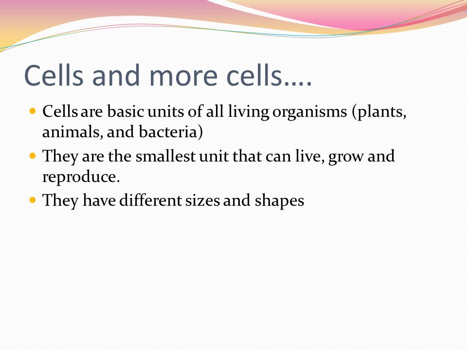 Cells and more cells…. Cells are basic units of all living organisms (plants, animals, and bacteria)