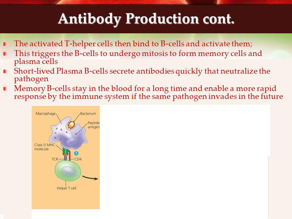 Antibody Production cont.