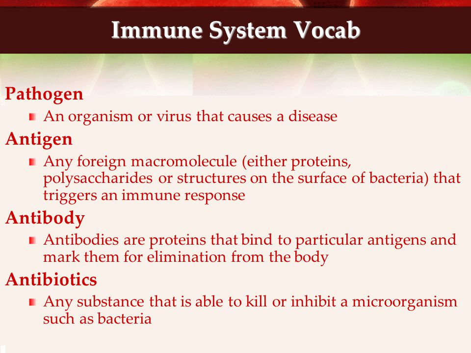 Immune System Vocab Pathogen Antigen Antibody Antibiotics