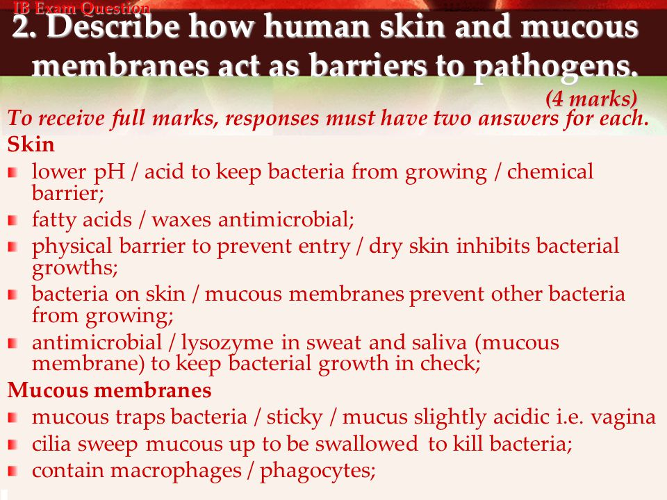 IB Exam Question 2. Describe how human skin and mucous membranes act as barriers to pathogens. (4 marks)