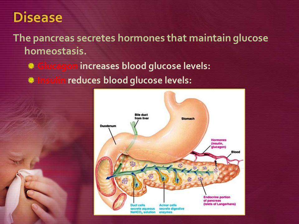 Disease The pancreas secretes hormones that maintain glucose homeostasis. Glucagon increases blood glucose levels: