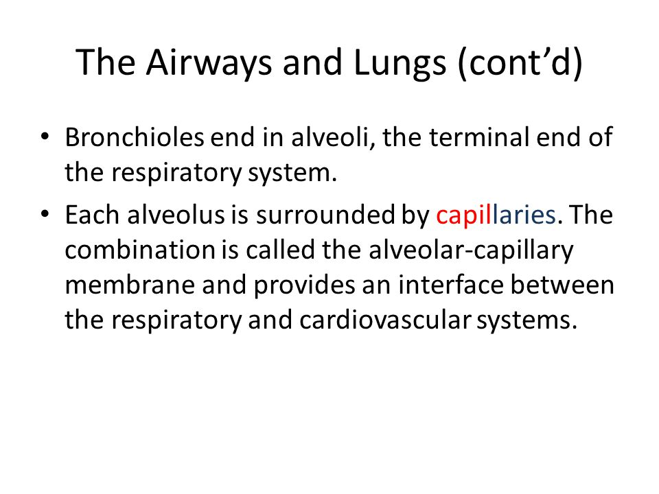 The Airways and Lungs (cont'd)