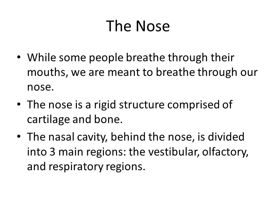 The Nose While some people breathe through their mouths, we are meant to breathe through our nose.