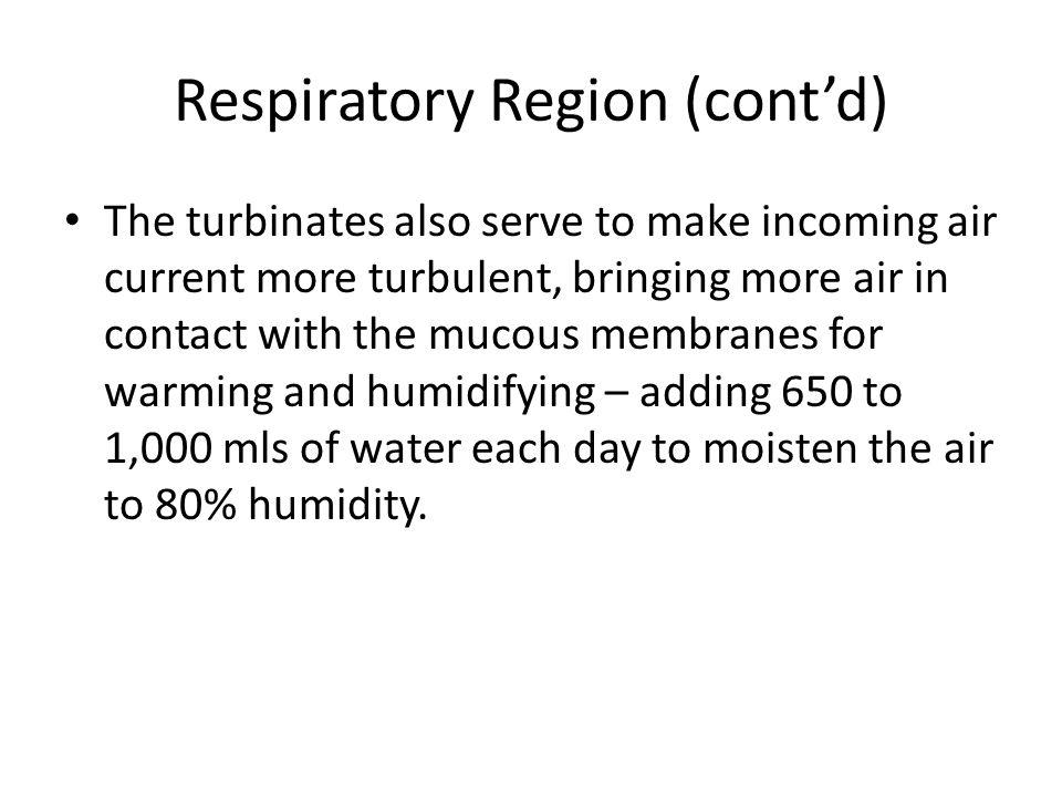 Respiratory Region (cont'd)