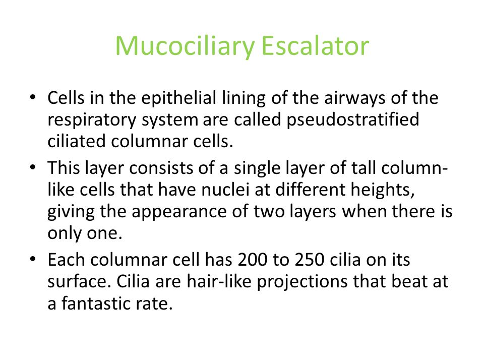 Mucociliary Escalator