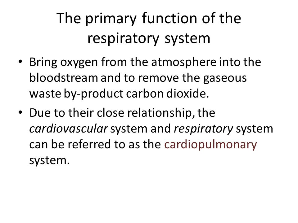 The primary function of the respiratory system