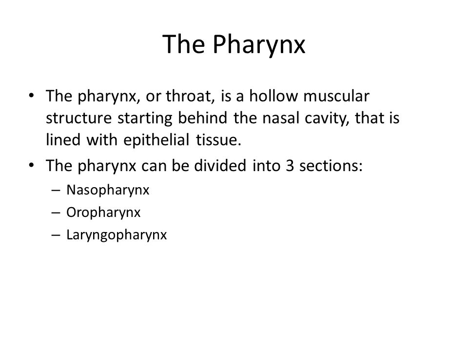 The Pharynx The pharynx, or throat, is a hollow muscular structure starting behind the nasal cavity, that is lined with epithelial tissue.