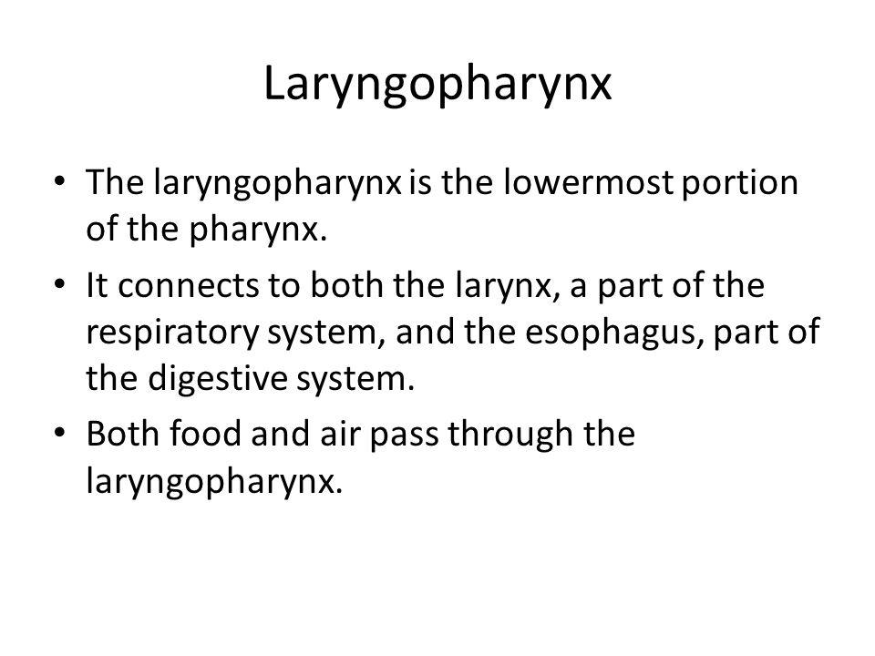 Laryngopharynx The laryngopharynx is the lowermost portion of the pharynx.