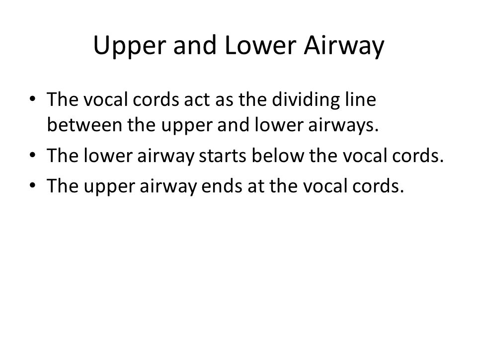 Upper and Lower Airway The vocal cords act as the dividing line between the upper and lower airways.