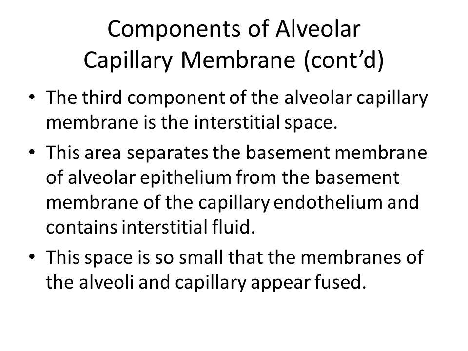 Components of Alveolar Capillary Membrane (cont'd)