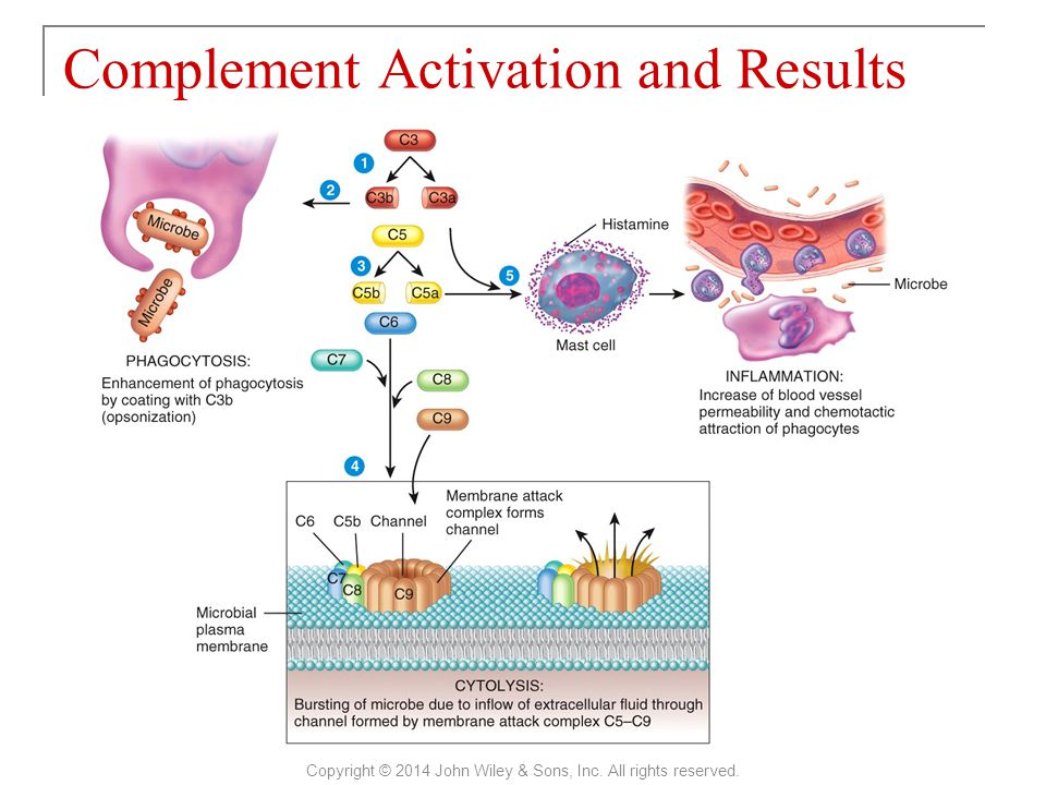 Complement Activation and Results