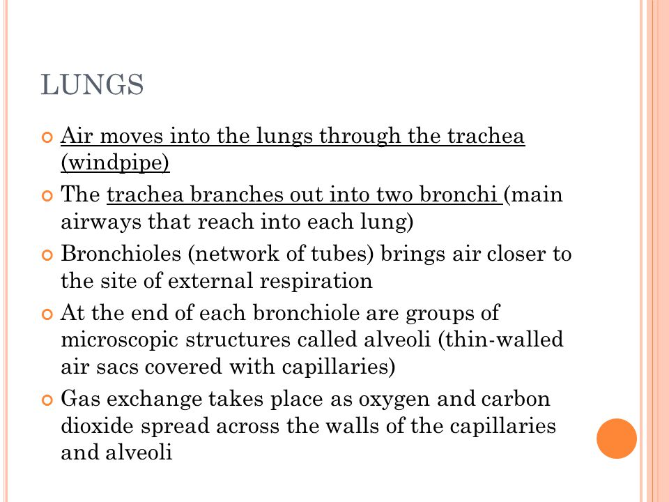 LUNGS Air moves into the lungs through the trachea (windpipe)