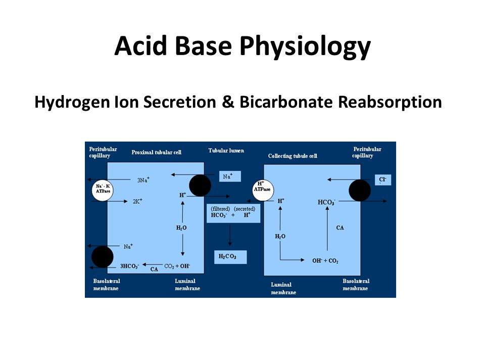 Acid Base Physiology Hydrogen Ion Secretion & Bicarbonate Reabsorption