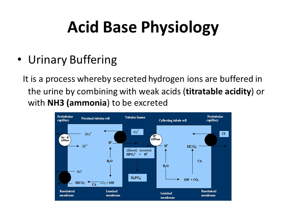 Acid Base Physiology Urinary Buffering