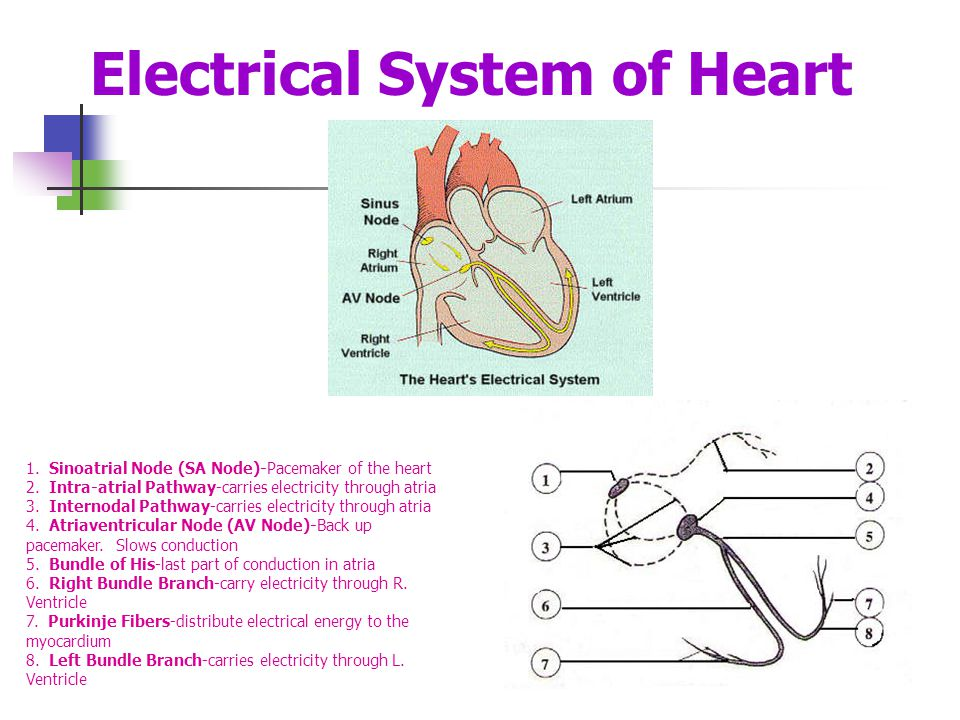 Electrical System of Heart