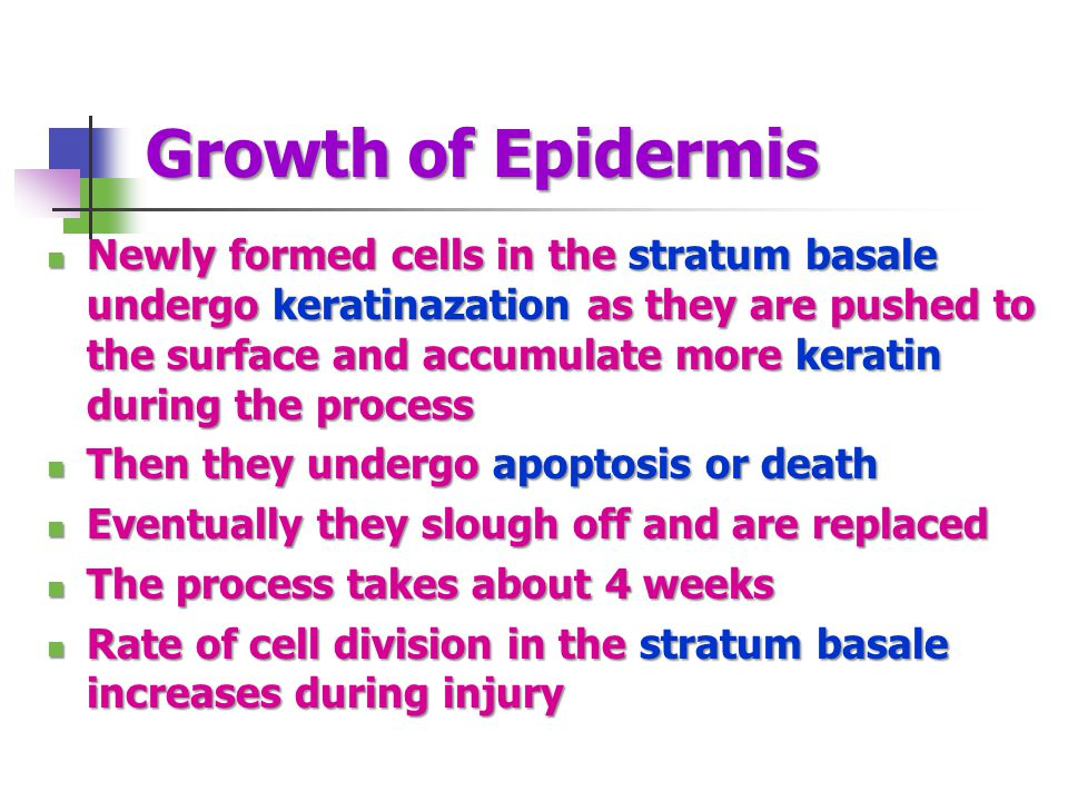 Growth of Epidermis