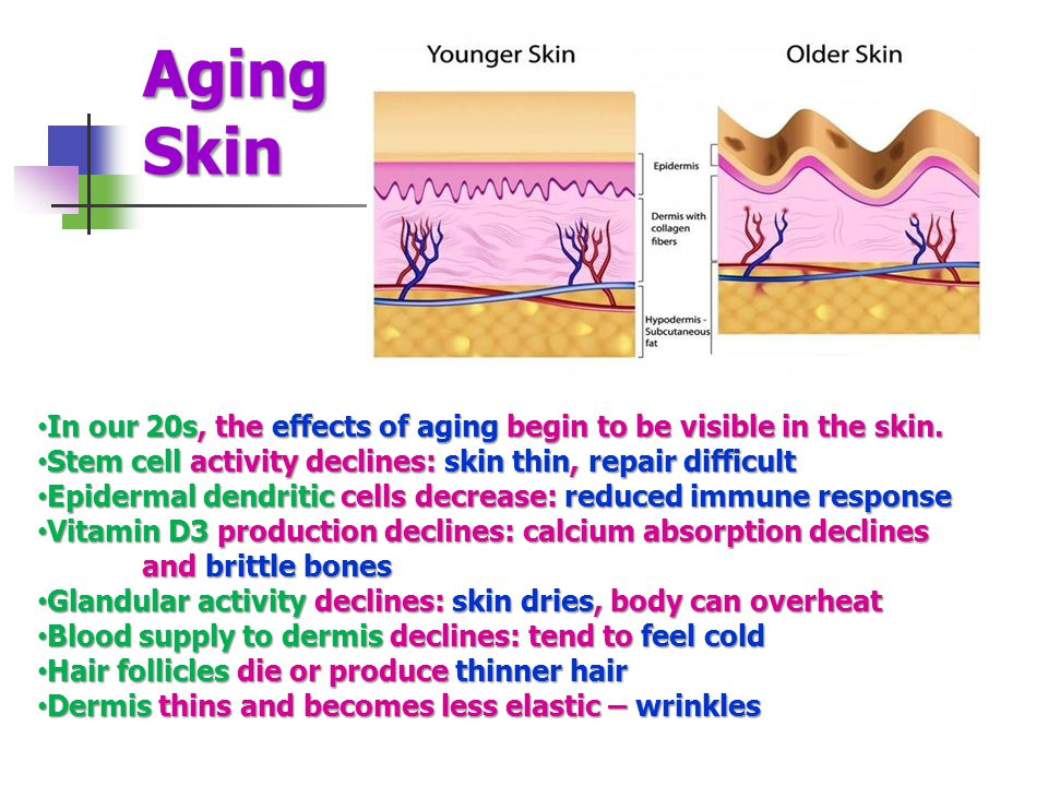 Aging Skin In our 20s, the effects of aging begin to be visible in the skin. Stem cell activity declines: skin thin, repair difficult.