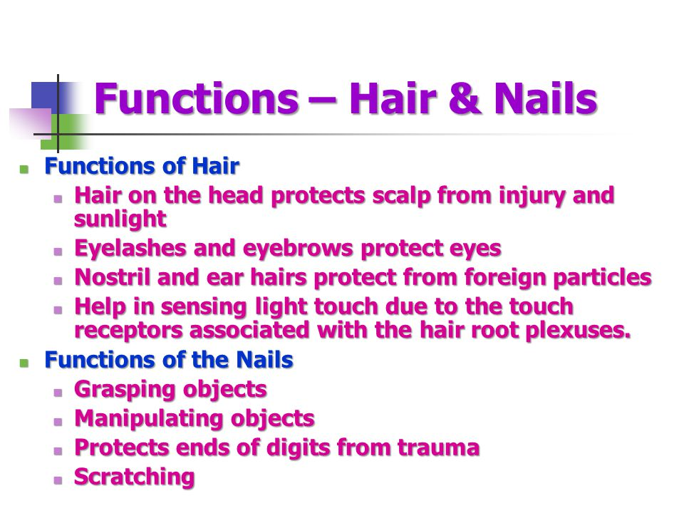 Functions – Hair & Nails