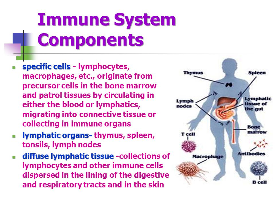 Immune System Components