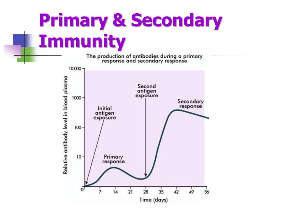 Primary & Secondary Immunity